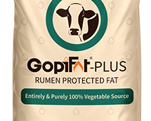 GopiFat-Plus
