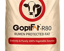 GopiFat-R80